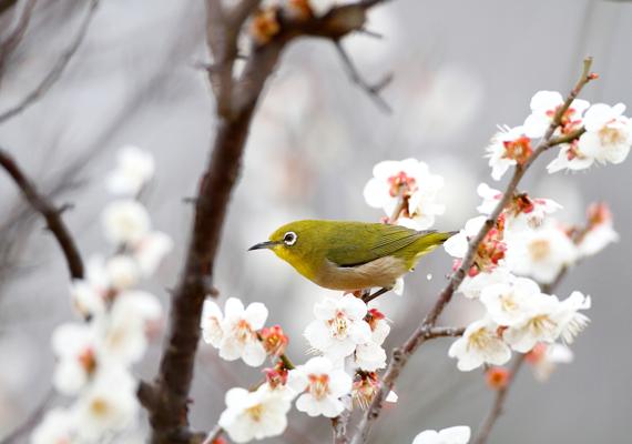 World Migratory Bird Day, Canon's Biodiversity Initiatives